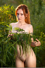 Redhead May In The Nature - 18