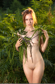 Redhead May In The Nature - 19
